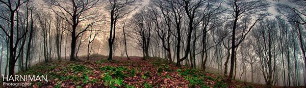 Hill in fog