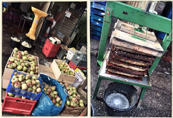 pressing & juicing the apples