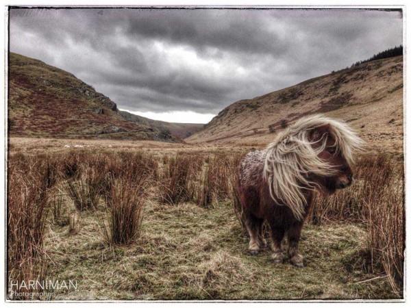 Found this little fella running wild on the hillside
