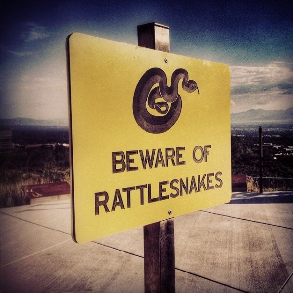 Beware of rattlesnakes on location